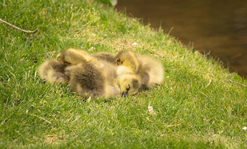 Sleeping babies up close.
