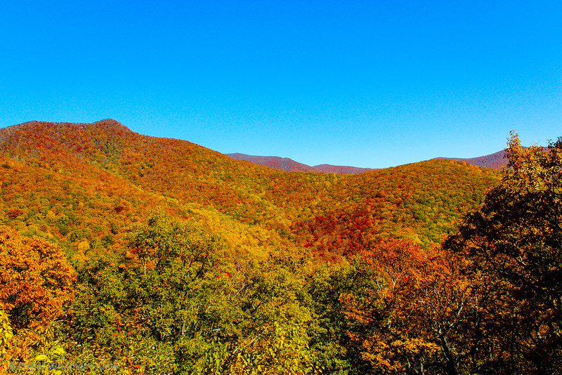 The Smokies in Red and Orange