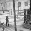 fox in the snow (belle & sebastian)<br /> Berlin, 2007