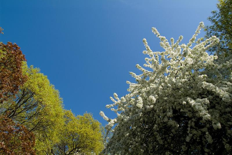 Central Park Blossom 39