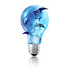 Light Bulb Dolphins