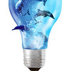Electric Light bulb with Dolphins swimming inside and breaking free.