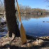 The water looked like glass as a paddle leaned against an oak tree on the edge of the Concord River in Billerica on April 23. Photo by Mary Leach