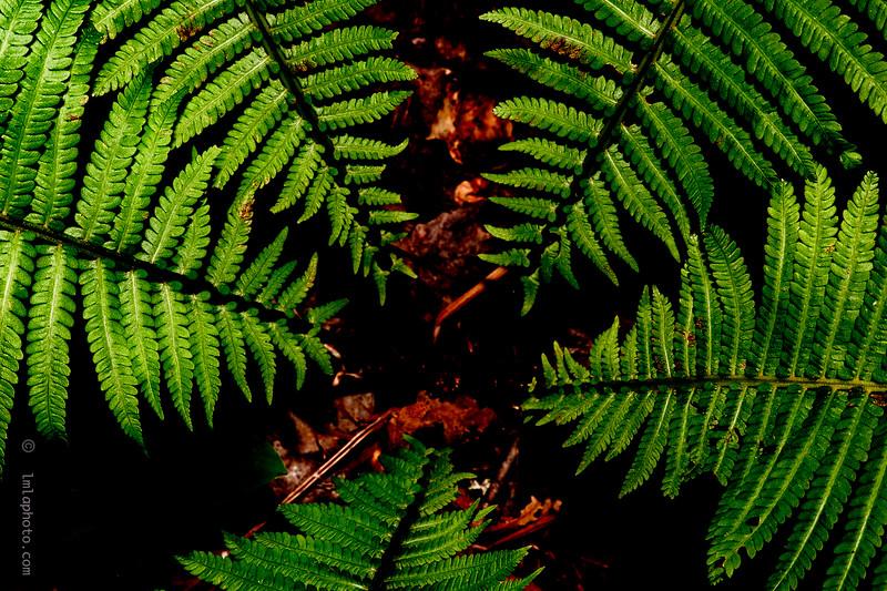 Louise-Morin-vegetation-514-703-4652