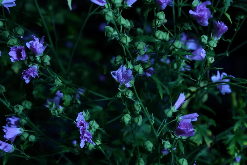 Alain_St_Jean-vegetation nocturne