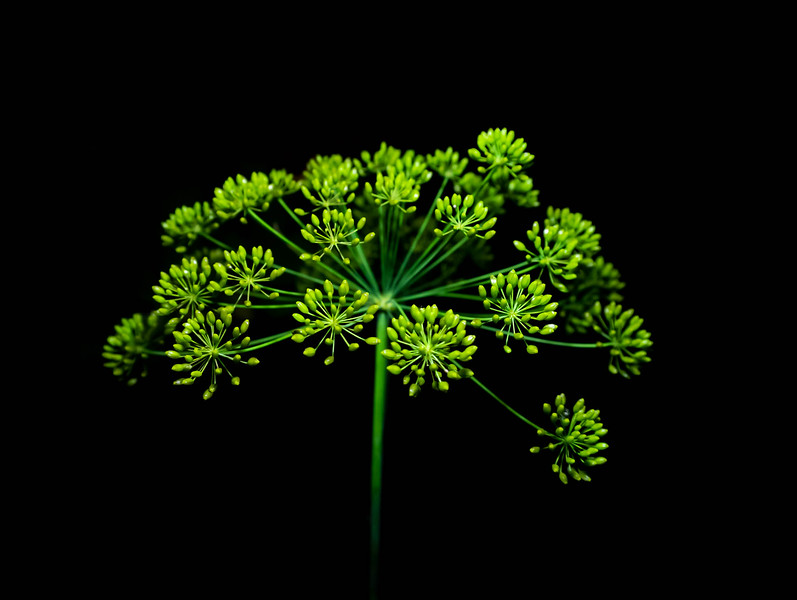 Christine-Bedard-végétation-5149839279