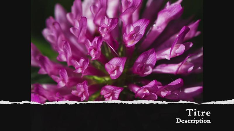 Dominique Plouffe une fleur de fleurs