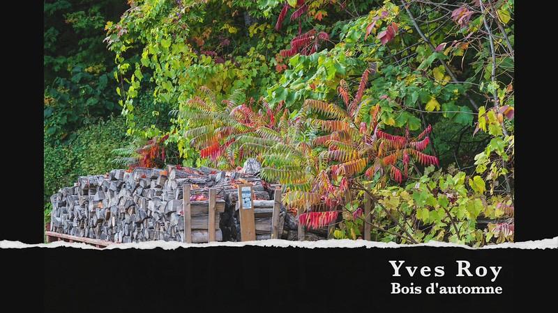 yves roy bois d'automne