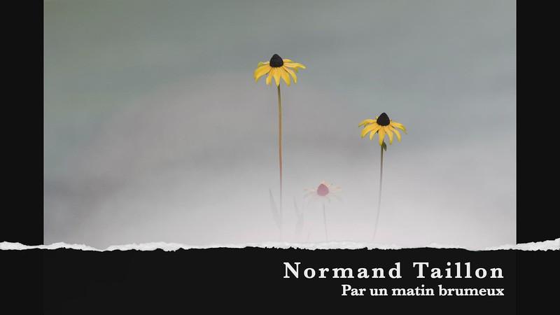 normand taillon par un matin brumeux
