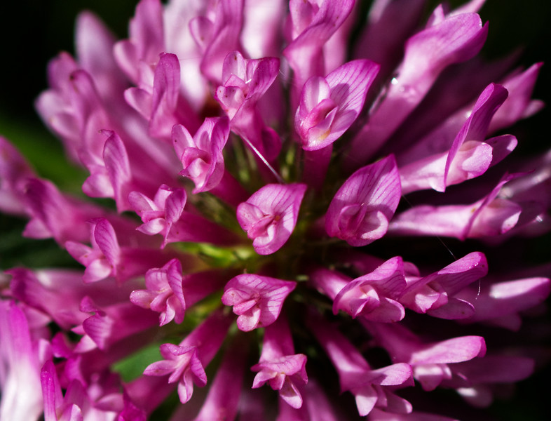 Dominique-Plouffe-Une fleur de fleurs