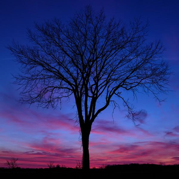 JF_Durand_fin_journée_arbre