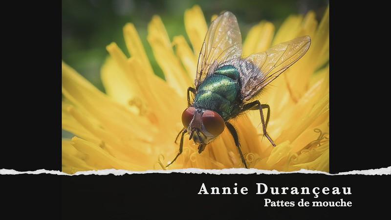 Annie Durançeau Pattes de mouche