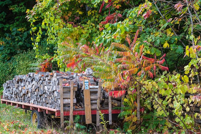 Roy-Yves-Bois_d'automne