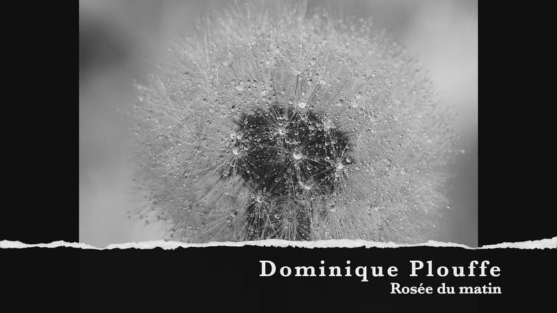Dominique Plouffe rosée du matin