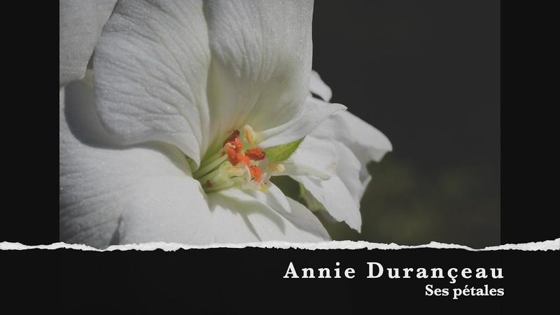 Annie Durançeau Ses pétales