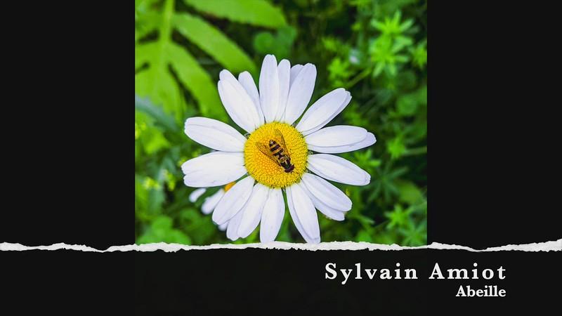 sylvain amiot abeille