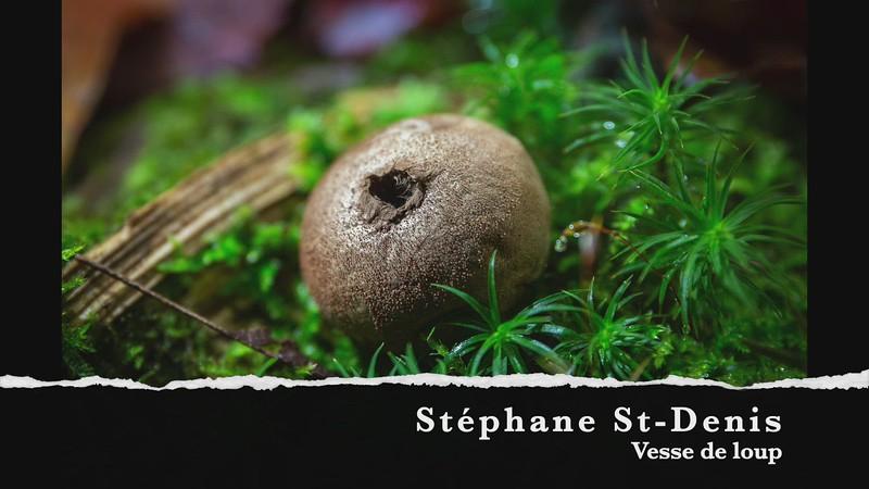 stephan st-denis vesse de loup