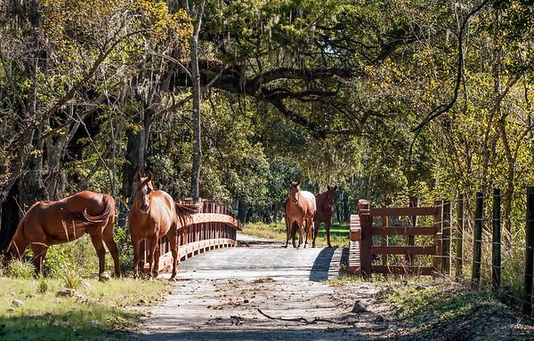 Cone Ranch - Itchepackosassa Creek bridge