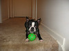 Daisy with her ball.