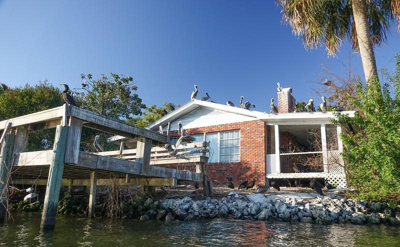 Bird House on Buzzard island