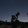 Night Photo of Joshua Trees Against Sky