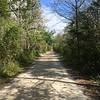 Loop Road in Big Cypress National Preserve
