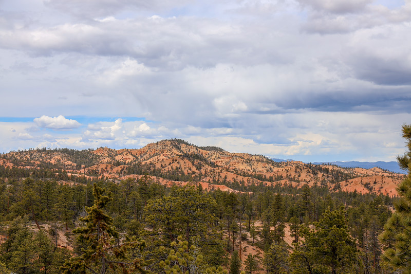 Forest and Red Rock Landscape with Storm Clouds on Thunder Mountain Trail in Utah