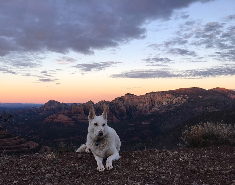 White Dog at Sunrise from Schnebly Hill Road Vista Over Sedona Arizona