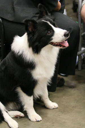 Border Collies and More