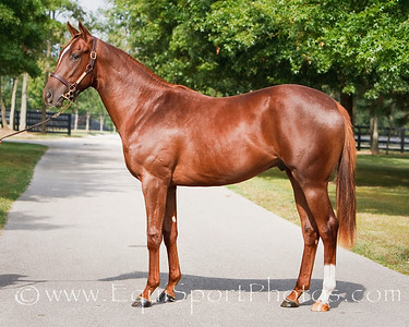 Halo River-Mr. Greeley '08 (yearling)