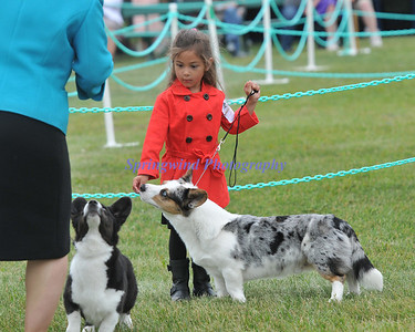 Cook Inlet Kennel Club