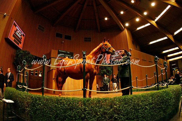Irish Cherry, Hip 284 in foal to Ghostzapper, sold for $2.7 million at Keeneland. 1.07.2007