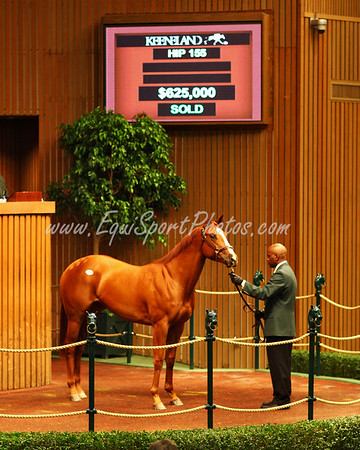 Hip 155 Riverboat Miss-More Than Ready (f.'06) at Keeneland 4.09.2008