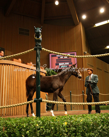 Hip 558, St. Liam-Forest Wildcat, weanling at Keeneland. (RNA) 11.06.2007