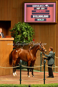 """Playful Act"" by Sadler's Wells world record mare. Keeneland 11.05.2007"