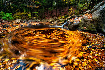 Autumn Swirl, Enders State Forest, Connecticut