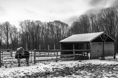 Eyeing the Stable (BW)