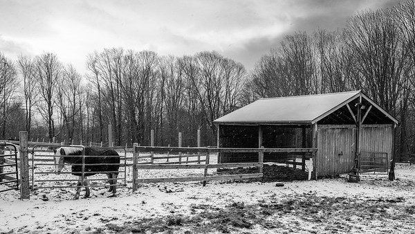 Snowy Morning at the Stable