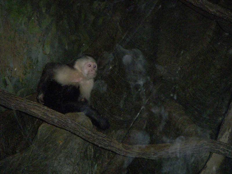 A tamarin monkey (he's nocturnal, hence the dark light)
