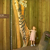 See how tall Avery is beside a Bengal tiger