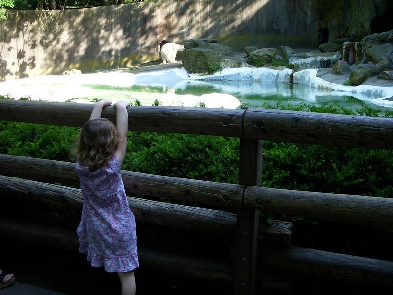 Looking at the polar bear