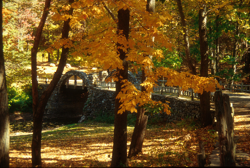 A hickory tree in full color grows in front of the stone bridge and castle road.