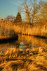 November on the Marsh<br /> Salt marsh at Rocky Neck SP. <br /> East Lyme, Connecticut