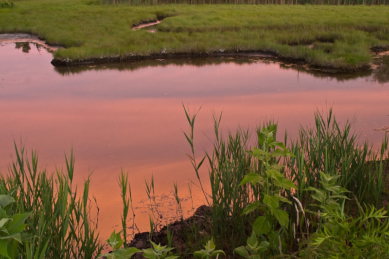 Sunset reflecting in the tidal water of Rocky Neck State Park