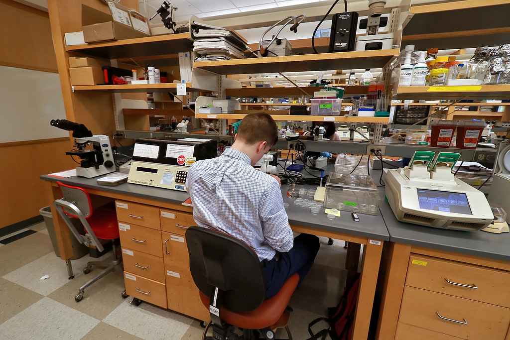 . Leominster High School junior Connor Casey talks about doing experiments on C. elegans at UMass Medical School Aaron Lazare Research Building. Here Casey works in the lab on Tuesday, October 9, 2018 with the C. elegans. He was trying to move four C. elegans from one petri dish to another. This was so he could keep them alive. SENTINEL & ENTERPRISE/JOHN LOVE