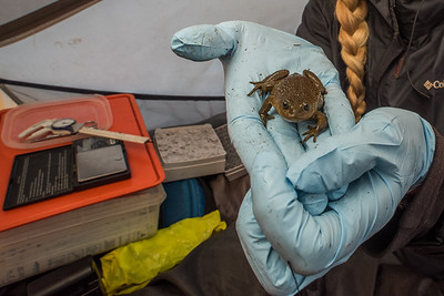 Endangered Species Monitoring
