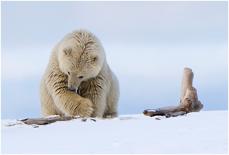 Messy cub and stick