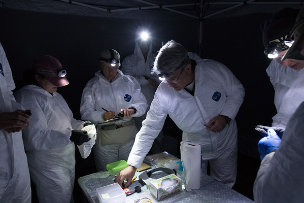 Biologists and technicians prepare the data station for incoming bats