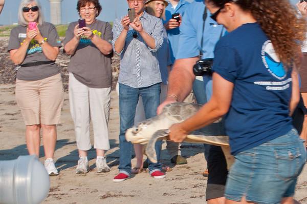 2012 Kemp's Ridley Sea Turtle Release