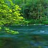Bright Green River Gorge